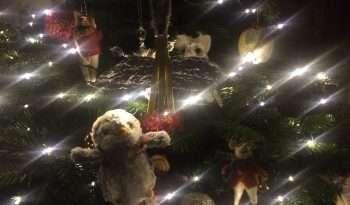 Arnold and christmas lights