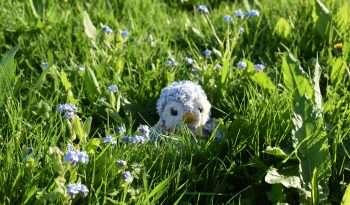 Arnold in grass
