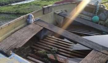 Arnold in old boat
