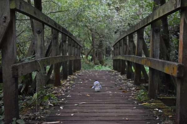 Arnold on a bridge