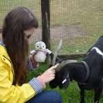Arnold meets a goat
