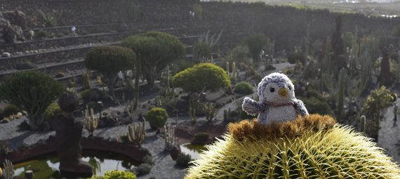 Arnold on a cactus