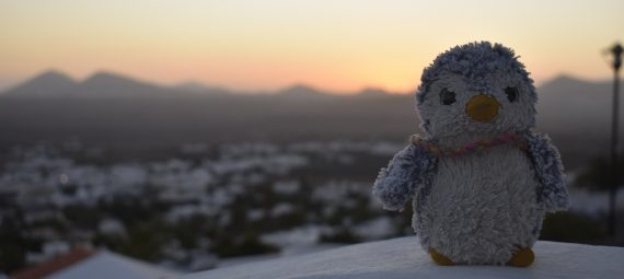 Arnold in sunset