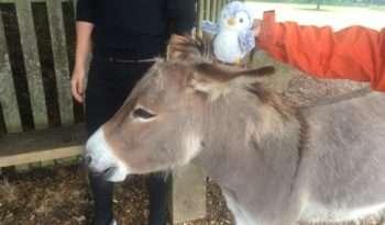 Arnold on a donkey