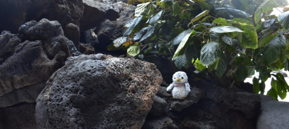 Arnold on the rocks