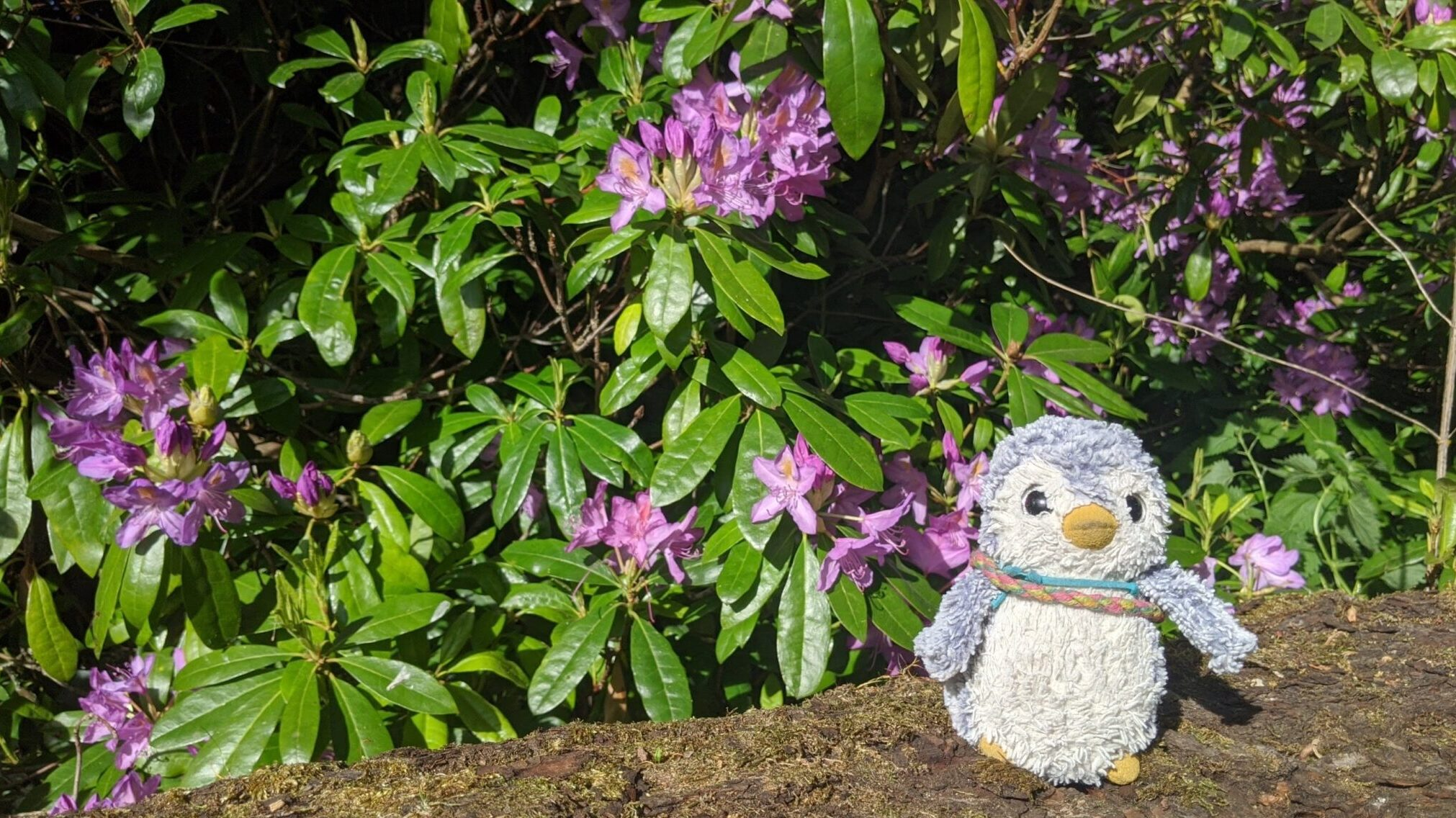Arnold with purple flowers
