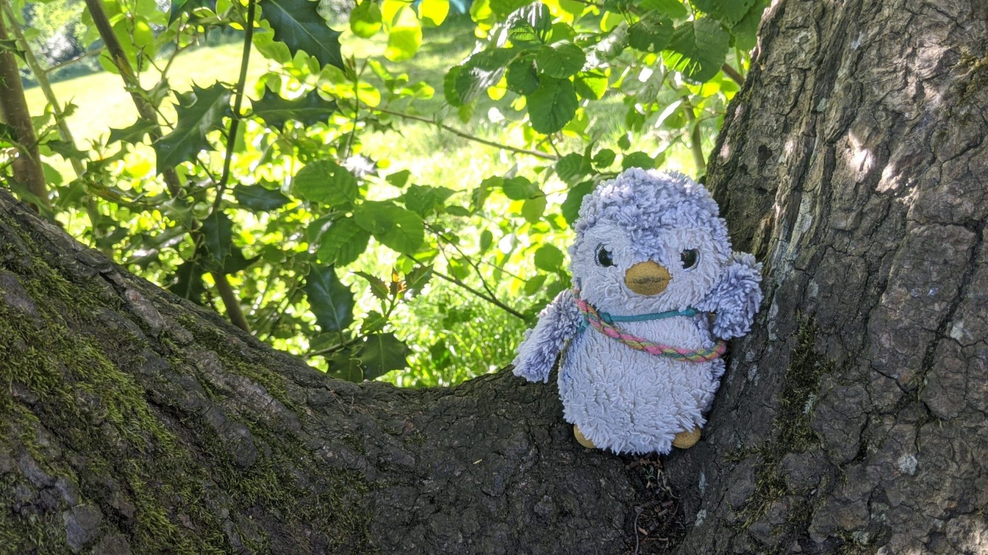 Arnold in a tree