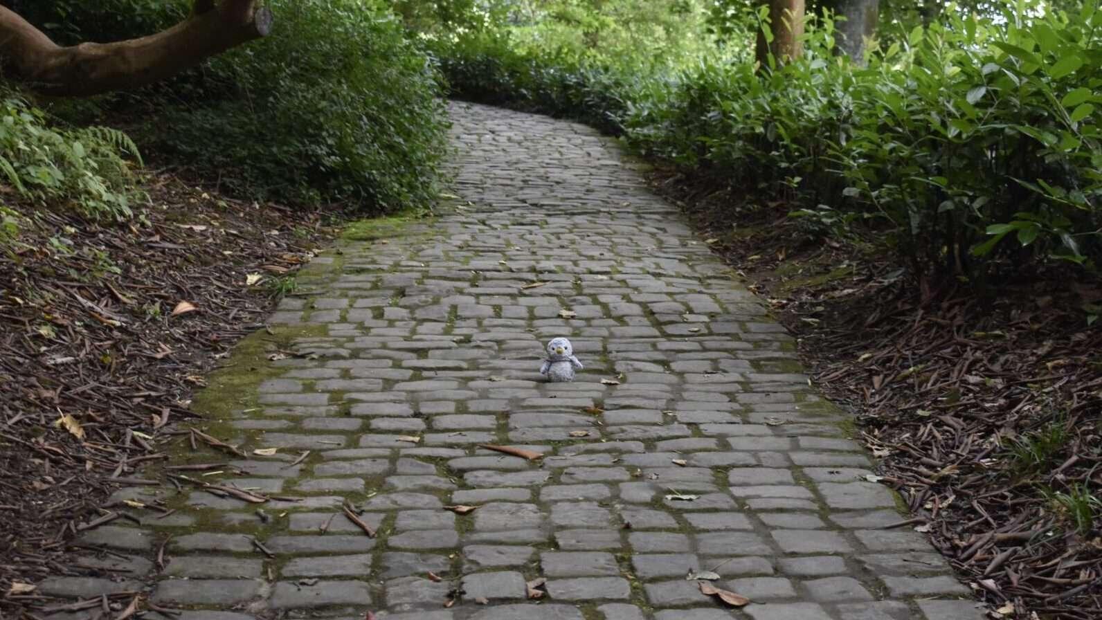 Arnold on pathway
