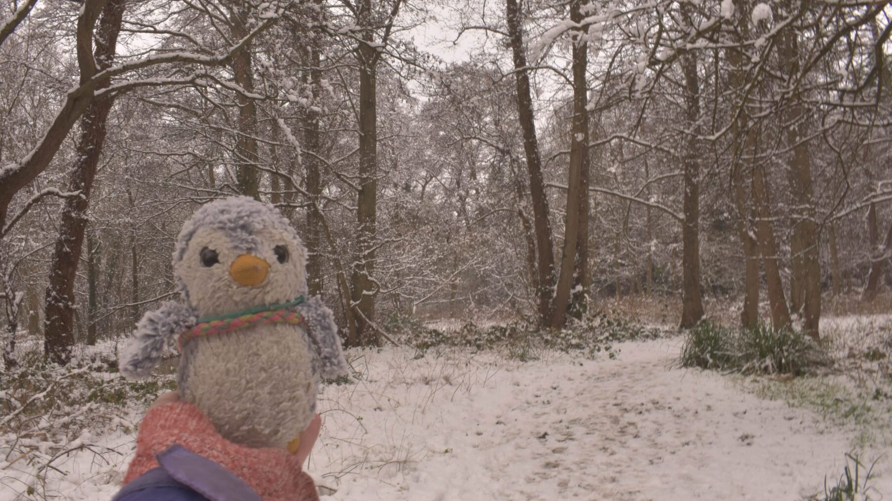 Arnold in a snowy forest