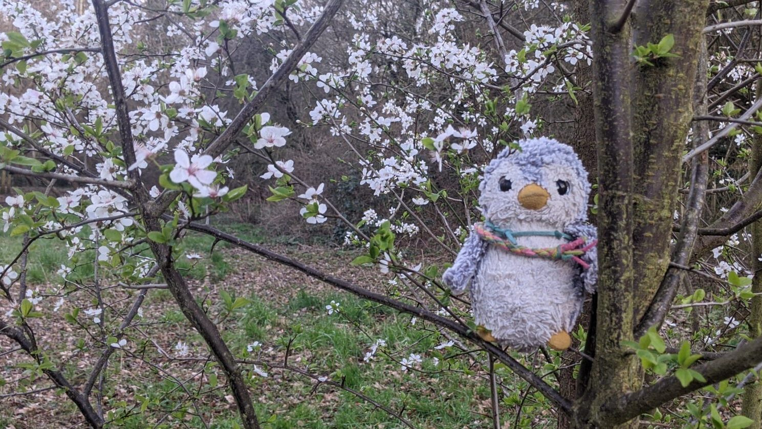 Arnold in a blossom tree