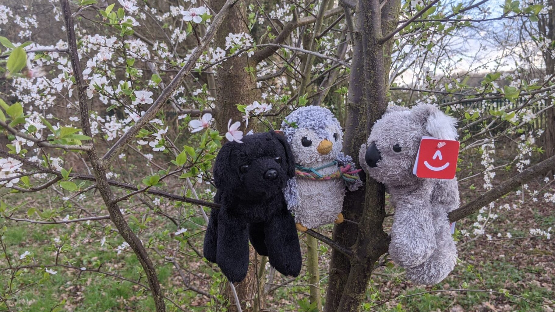 Socks, Arnold and Koa in a tree