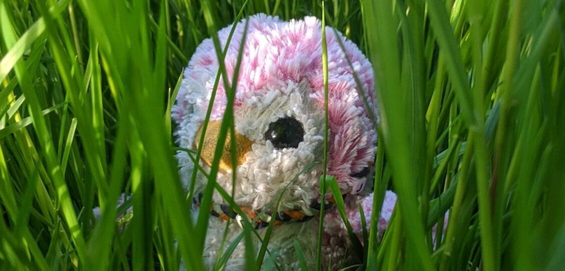 Candyfloss in the grass